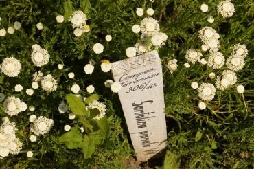 Vácrátót arboretum white flowers